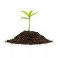 Удобрения и почвогрунты